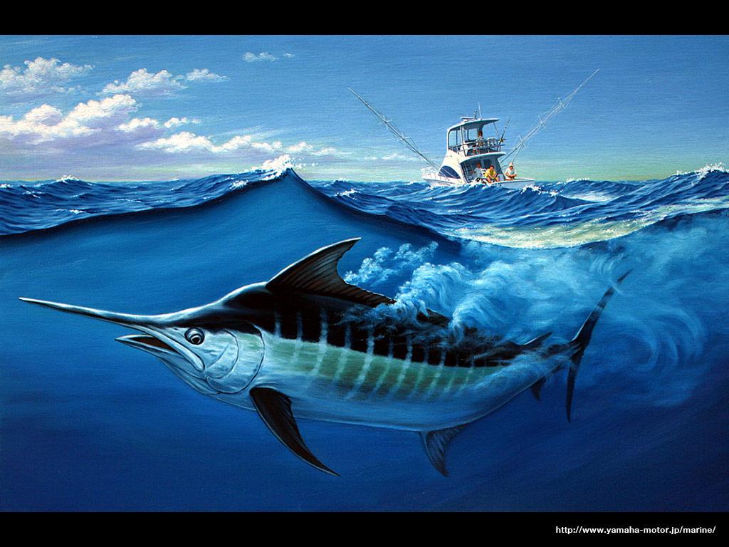 壁紙 - マリン製品,カジキ釣り