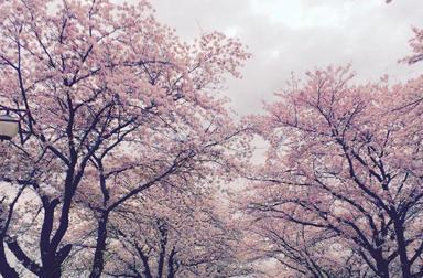 モトクロス「YAMAHA FACTORY RACING TEAM」が始動。「桜・春」とのギャップがすごい!? マディな開幕戦が終了!
